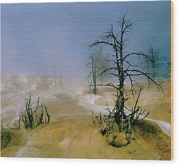 Palette Spring Wood Print by Ed  Riche