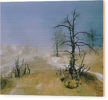 Palette Spring Wood Print
