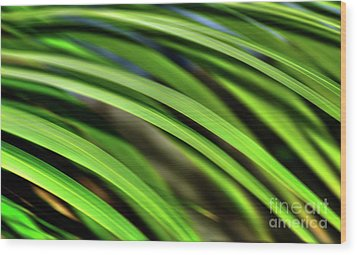 Wood Print featuring the photograph Palm Abstract By Kaye Menner by Kaye Menner
