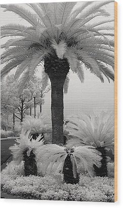 Palm At Gulf Shores Wood Print by Fred Baird