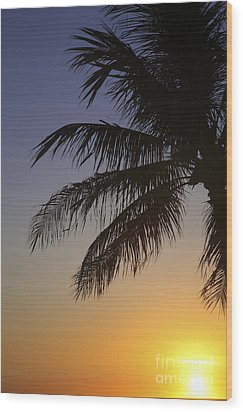 Palm At Sunset Wood Print by Brandon Tabiolo - Printscapes