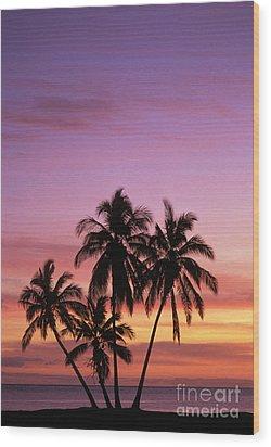 Palm Cluster Wood Print by Allan Seiden - Printscapes