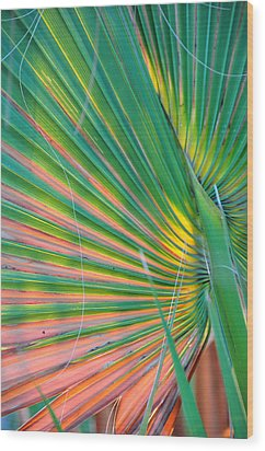 Palm Colors Wood Print by Jan Amiss Photography