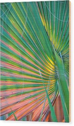 Palm Colors Wood Print