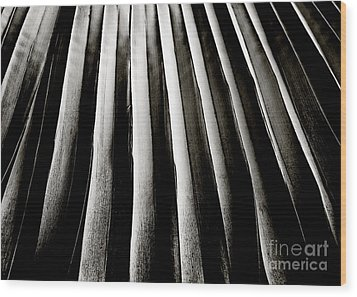 Palm Frond Wood Print by Charmian Vistaunet