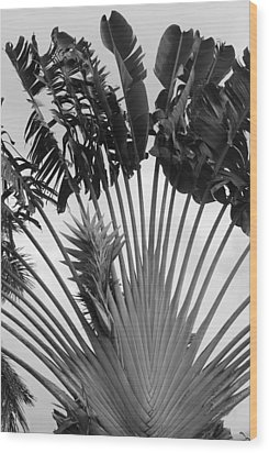 Palm Frons Wood Print by Rob Hans