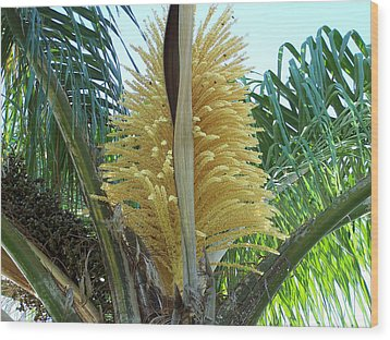 Palm In Bloom Wood Print by Evelyn Patrick