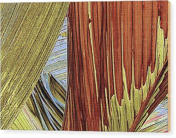 Palm Leaf Abstract Wood Print by Ben and Raisa Gertsberg
