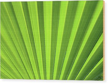 Palm Leaf Abstract Wood Print