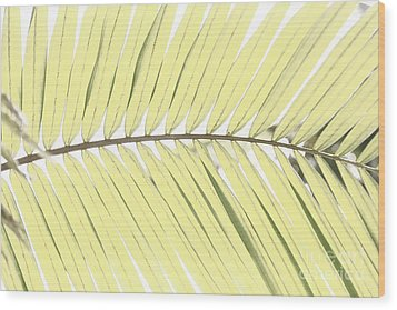 Palm Leaf Wood Print by Gaspar Avila