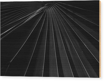 Palm Leaf Wood Print by Roger Mullenhour
