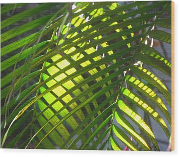 Palm Leaves In Sun Wood Print