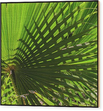Wood Print featuring the photograph Palm Pattern No.1 by Mark Myhaver