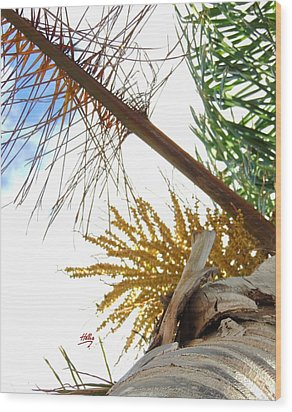 Palm Sky View Wood Print by Linda Hollis