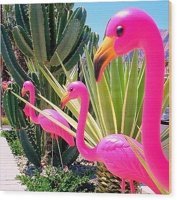 Palm Springs Flamingos 7 Wood Print by Randall Weidner