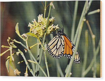 Wood Print featuring the photograph Palm Springs Monarch by Kyle Hanson