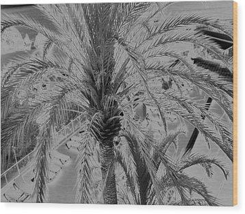 Palm Tree Wood Print by John Bradburn