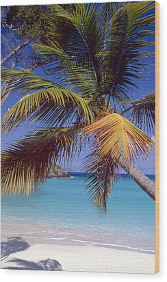 Palm Tree On A Caribbean Beach Wood Print by George Oze