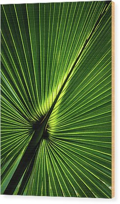 Palm Tree With Back-light Wood Print