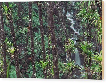 Palm Trunks And Waterfall El Yunque Wood Print by Thomas R Fletcher