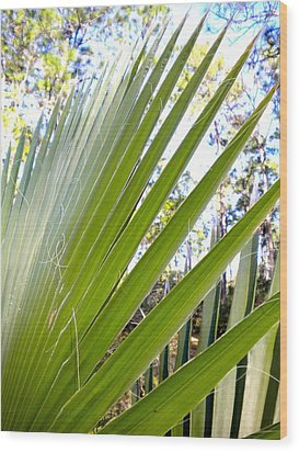 Wood Print featuring the painting Palmetto 1 by Renate Nadi Wesley