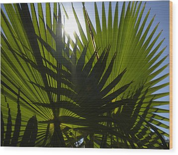 Wood Print featuring the photograph Palmetto 3 by Renate Nadi Wesley