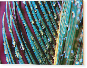 Palms After A Rainy Day Wood Print by Mariola Bitner