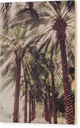 Palmtree Wood Print by Jeanette Korab