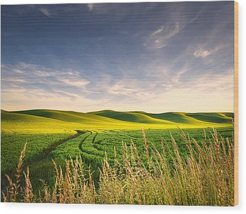 Wood Print featuring the photograph Palouse Bounty by Dan Mihai