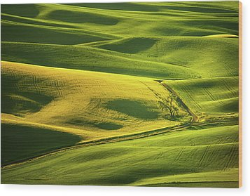 Wood Print featuring the photograph Palouse Shades Of Green by Dan Mihai