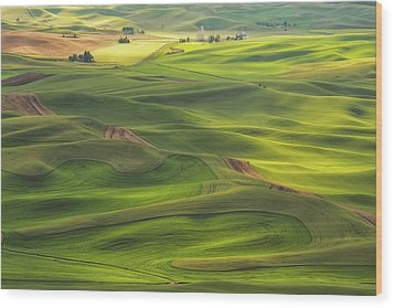 Wood Print featuring the photograph Palouse Views by Patricia Davidson