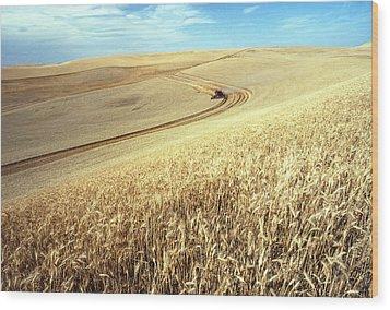 Palouse Wheat Wood Print by USDA and Photo Researchers