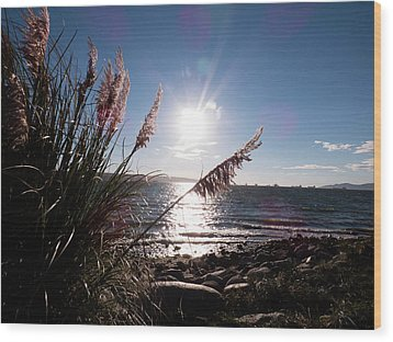 Pampas By The Sea Wood Print