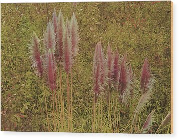 Wood Print featuring the photograph Pampas Grass by Athala Carole Bruckner