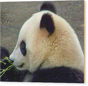 Panda Snack Wood Print by Karen Wiles