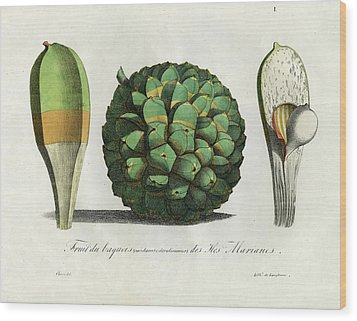 Pandanus Fruit Guam Marianas Wood Print by Choris