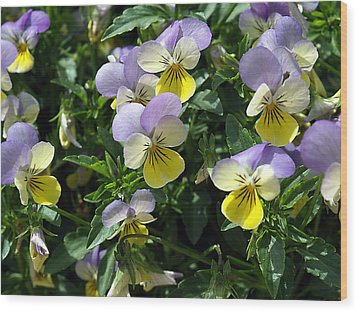 Pansies Wood Print