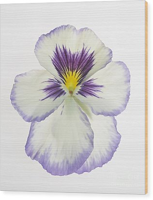 Pansy 2 Wood Print by Tony Cordoza