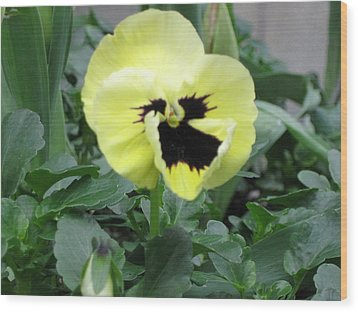 Pansy Wood Print by AJ Brown