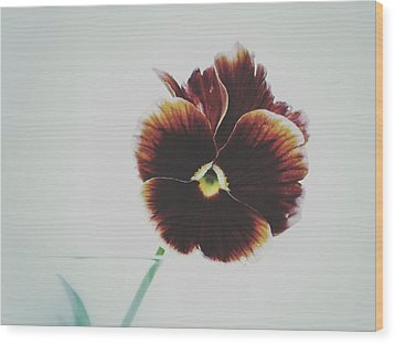 Pansy Face Wood Print by Karen Stahlros