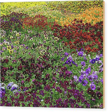 Wood Print featuring the photograph Pansy Garden by Frank Tschakert