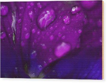 Pansy Rain Macro Wood Print