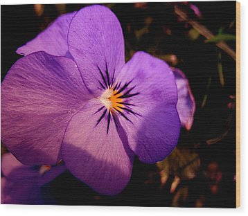 Pansy Wood Print by Yannick Guerin