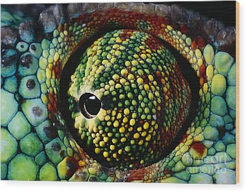 Panther Chameleon Eye Wood Print by Daniel Heuclin and Photo Researchers