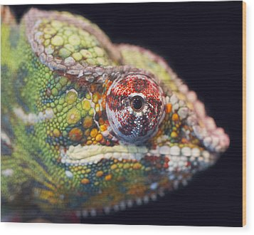 Wood Print featuring the photograph Panther Chameleon  by Nathan Rupert