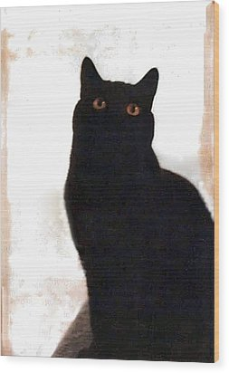 Panther The British Shorthair Cat Wood Print