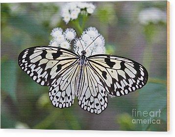 Paper Kite Wood Print