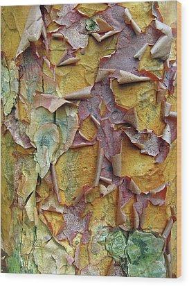 Paperbark Maple Tree Wood Print by Jessica Jenney