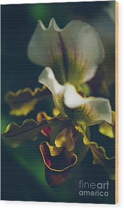 Wood Print featuring the photograph Paphiopedilum Villosum Orchid Lady Slipper by Sharon Mau