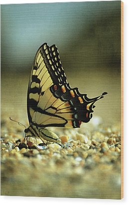 Papilio Glaucus Eastern Tiger Swallowtail Wood Print